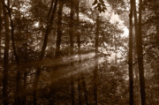 Wood Photo Originals - Forest Mist B and W by Steve Gadomski