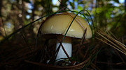 Forest Floor Photos - Forest Mushroom by Timothy Thornton