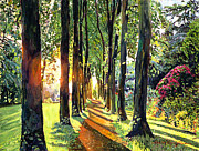 Shadows Paintings - Forest of Enchantment by David Lloyd Glover