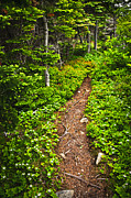 Tree Roots Metal Prints - Forest path in Newfoundland Metal Print by Elena Elisseeva