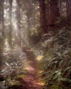 Light Rays Prints - Forest Path Print by Leland Howard