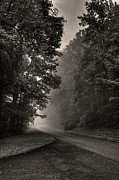 Country Road Posters - Forest Path Poster by Maria Jaeger Photography