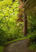 Arboretum Photos - Forest Path by Mike Reid