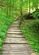 Ramona Johnston - Forest Path