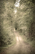 Scary Photo Acrylic Prints - Forest Path Acrylic Print by Svetlana Sewell
