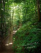 Terry Kirkland Cook - Forest path