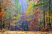 Fall Framed Prints Prints Prints - Forest Rainbow Print by Don Prioleau