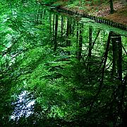 Green Forest Photos - Forest Reflection by David Bowman