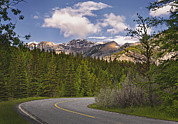 The Main Art - Forest Road In Kananaskis Country by Tatiana Boyle