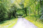 Colorful Photos Digital Art Posters - Forest road Poster by Svetlana Sewell