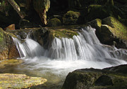 Falling Water Creek Prints - Forest Stream 2a Print by Sharon  Talson