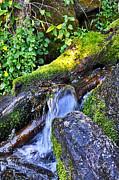 Forest Stream Print by Cheri Randolph