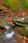 Arkansas Metal Prints - Forest Stream Metal Print by Ryan Heffron
