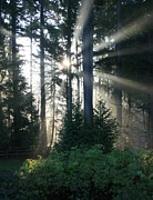 Dawn Metal Prints - Forest Sunrise Metal Print by Crista Forest