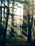 Forest Sunrise Print by Paul Sachtleben