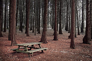 Autumn Leaf Photos - Forest Table by Carlos Caetano