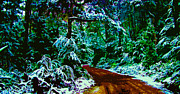 Winter Landscapes Digital Art Metal Prints - Forest trail in the winter Metal Print by Phill Petrovic