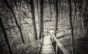 Boardwalk Prints - Forest Trail Print by Scott Norris