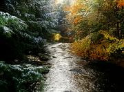 Fall River Scenes Prints - Forest With Creek Running Through It Print by David Chapman