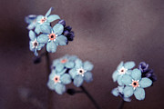 Textured Floral Framed Prints - Forget Me Not 01 - s05dt01 Framed Print by Variance Collections