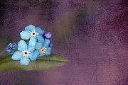 Textured Floral Framed Prints - Forget Me Not 02 - s0304bt02b Framed Print by Variance Collections