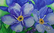 Forget Me Not Paintings - Forget-me-nots by Lynne Hurd Bryant