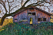 Overgrown Metal Prints - Forgotten Barn Metal Print by Garry Gay