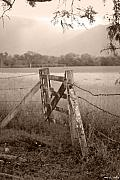 Gate Photo Prints - Forgotten Fields 2 Print by Holly Kempe