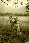 Gate Metal Prints - Forgotten Fields Metal Print by Holly Kempe
