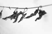Wintry Photo Prints - Forgotten Print by Gabriela Insuratelu