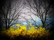 Northern Virginia Photos - Forsythia By The Mountains by Joyce  Kimble Smith