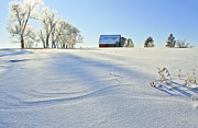 Frost Photo Originals - Fort Collins Colorado In January by James Steele