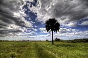 Palm Tree Greeting Cards - Fort Moultrie Palm  by Dustin K Ryan