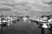 Sabal Palm Trees Prints - Fort Pierce City Marina BW Print by Lynda Dawson-Youngclaus