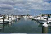 Sabal Palm Trees Prints - Fort Pierce City Marina Print by Lynda Dawson-Youngclaus