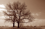 Fort Smith Arkansas Prints - Fort Smith Trees Print by Nina Fosdick