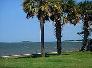 Palmetto Trees Prints - Fort Sumter Charleston SC Print by Susanne Van Hulst