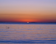 Pic Posters - Fort Sumter Sunrise Poster by Al Powell Photography USA