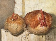 Chickens Paintings - Forty Winks by JG Marks