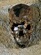 Skull Photos - Fossilised Skull Of A Homo Erectus Boy From Kenya by Volker Stegernordstar - 4 Million Years Of Man