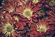 Red Flowers Art - Foulee de petales - 04b by Variance Collections
