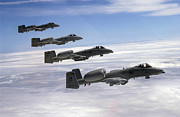 Formation Flying Posters - Four A-10 Thunderbolt Iis Fly Poster by Stocktrek Images