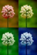 Lightning Fine Art Posters Posters - Four Colorful Onion Flower Power Poster by James Bo Insogna