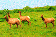 Tule Elk Posters - Four Elks Poster by Wingsdomain Art and Photography