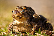 Andy Stuart - Four Eyed Toad