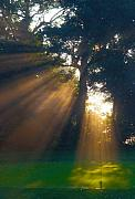 Sun Rays Art - Four Green Sunrise by Edwin Voorhees