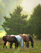 Equine Photo Posters - Four of a Kind Poster by Ron  McGinnis