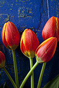 Four Metal Prints - Four orange tulips Metal Print by Garry Gay