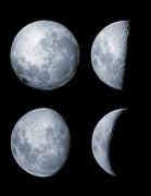 Lunar Posters - Four Phases Of The Moon Poster by Rolf Geissinger