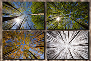 White Snow Acrylic Prints - Four seasons forest Acrylic Print by Mircea Costina Photography